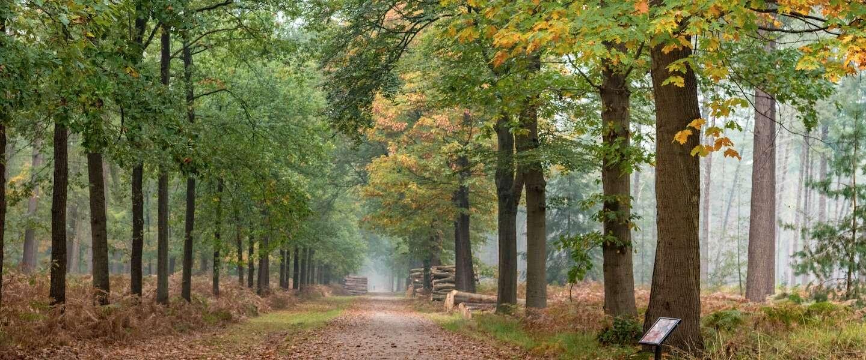 De mooiste wandeling door het Mastbos in Breda: neem het boswachterspad