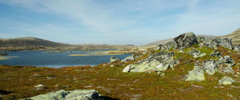 Het land van koffie en verse vis: de culinaire kant van Noorwegen