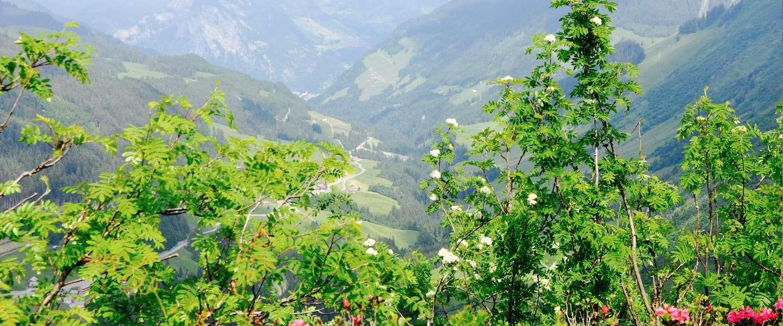 Maak een kruidenwandeling in het Großes Walsertal