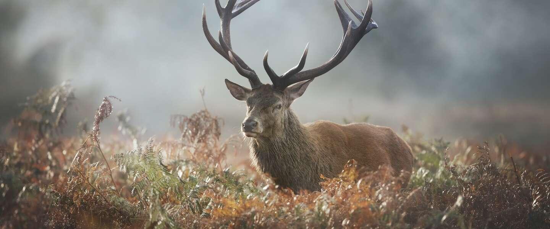 De natuur in: op zoek naar de Grote Vijf van Nederland