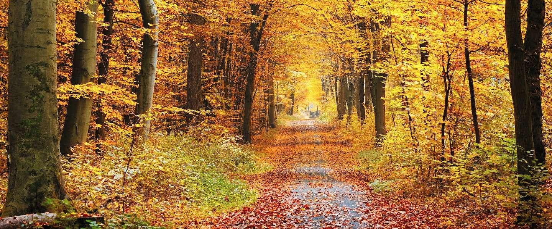 15 foto's die bewijzen dat de herfst het allermooiste seizoen is