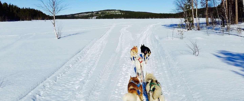 Hondensleeën in Lapland: puur genieten!