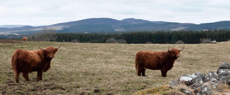 Ontdek Inverness: 8 tips om te doen