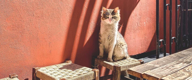 Een droombaan in deze crisis: kattenknuffelaars in Istanbul