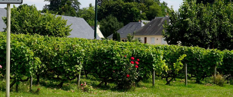 Le Vallee du Loir, het circuit van Le Mans, Le Loir ét Les Vins