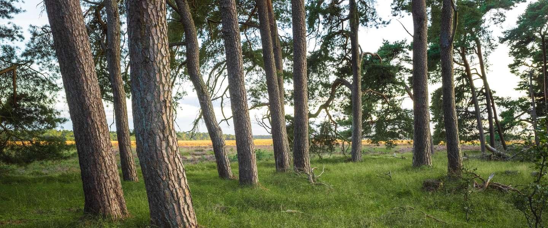 Ga de natuur in! 5 tips voor een dagtrip in Nederland