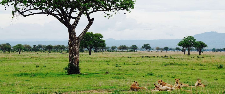 Op safari in Tanzania: Mikumi National Park
