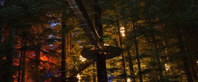 doen in nieuw zeeland tree walk door prachtig verlicht bos