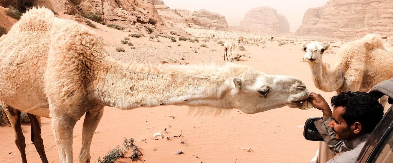 Roadtrip door Jordanië: 750 km en 5 onvergetelijke plekken