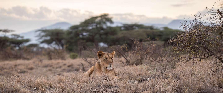Op safari in Zuid-Afrika? Dit is wat je kunt verwachten!