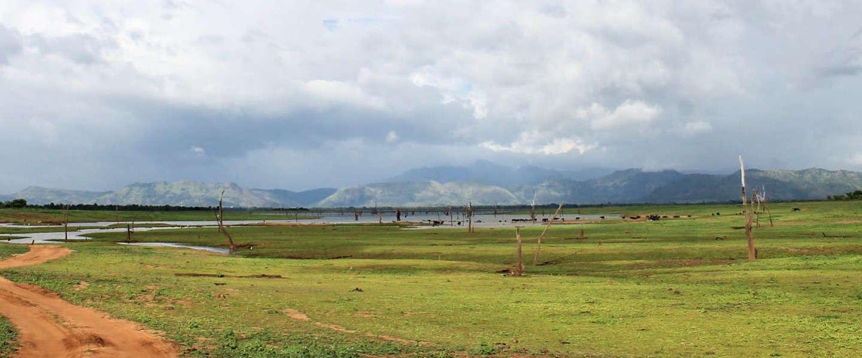 Olifanten spotten in Sri Lanka