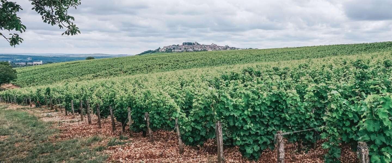 5 tips om te doen in Centre-Val de Loire en wijngebied Sancerre