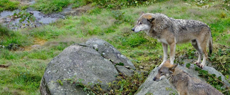Limousin, Tapijtkunst in Aubusson, en wolven in les Loups de Chabrières