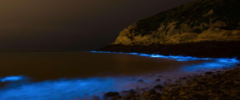 Zeevonk, een magisch natuurverschijnsel, wanneer zie je het?