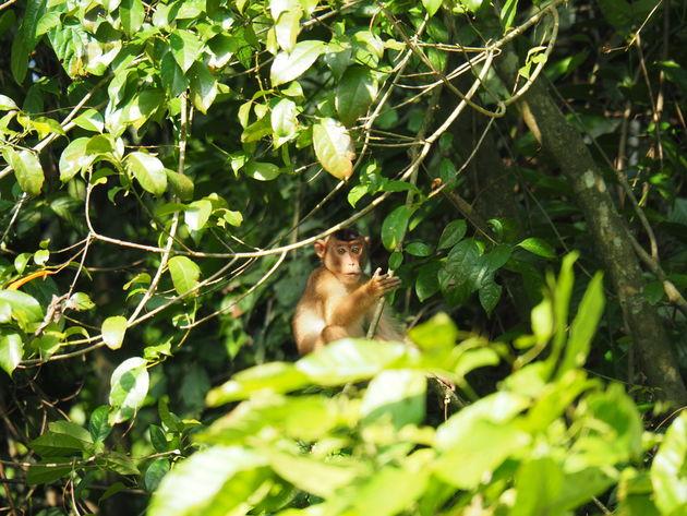 18. Makaak Tabin wildlife reserve