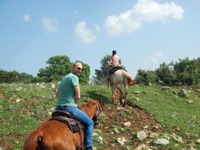 israel_paarden