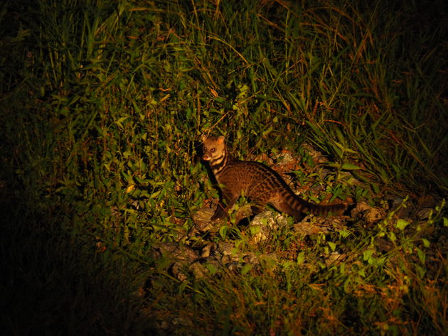 24. Tabin wildlife reserve