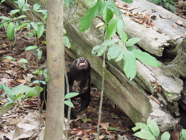 3. Bornean Sun Bear Conservation Centre