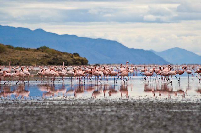 reis_kenia_flamingo's
