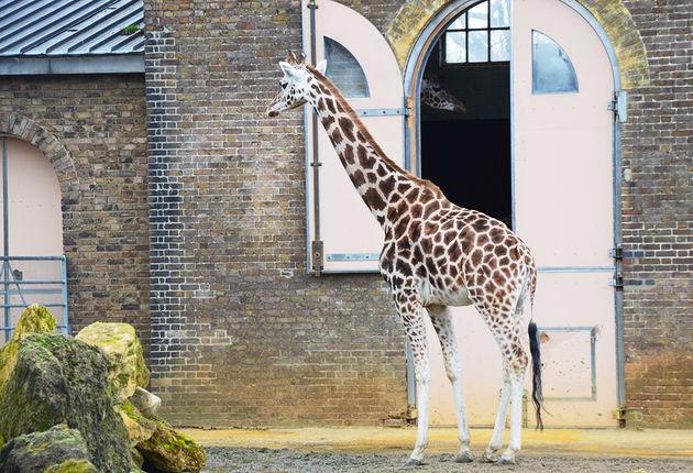 zoo-londen-park