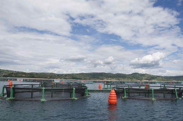 slovenie_fonda_visfabriek