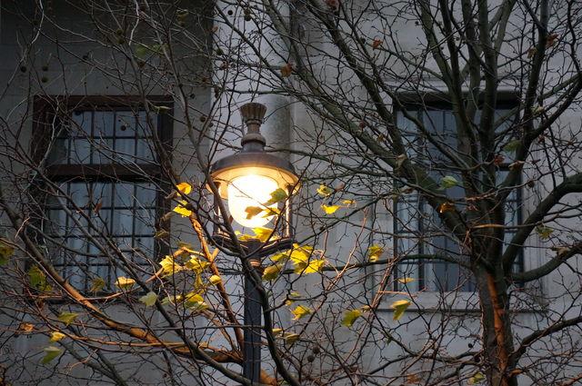 lights_tree_london