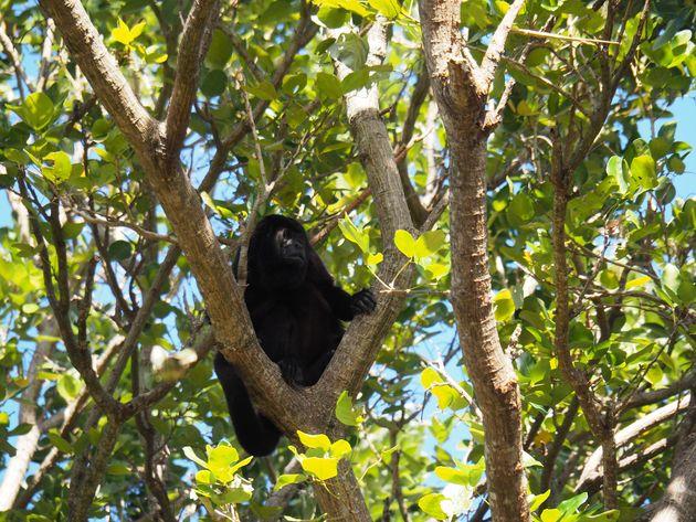 8. Spot wildlife op de Rio Istian in Ometepe