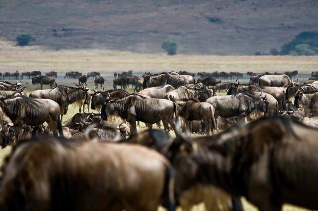 reis_kenia_dieren