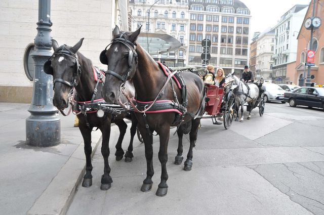 paarden_wenen_koets