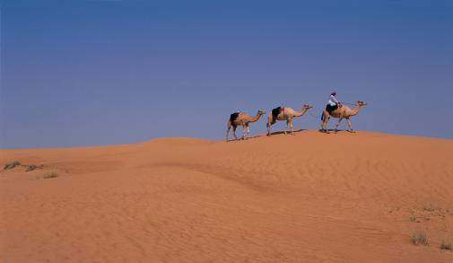 DesertCamels.jpg