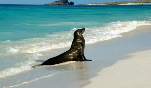 Galapagos_Islands.jpg