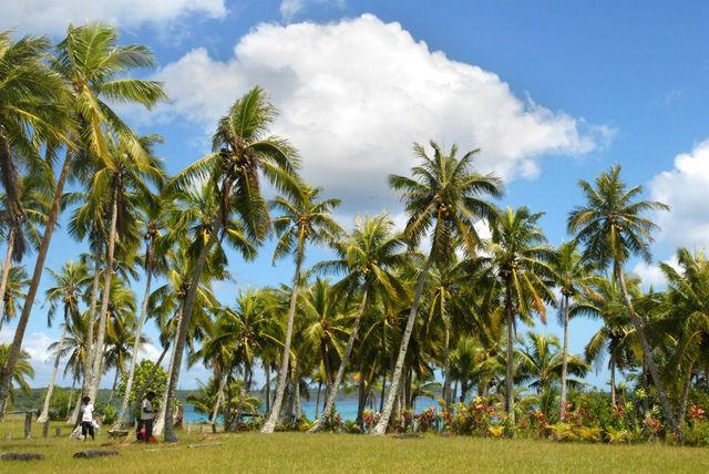 palmbomen_nieuw_caledonie