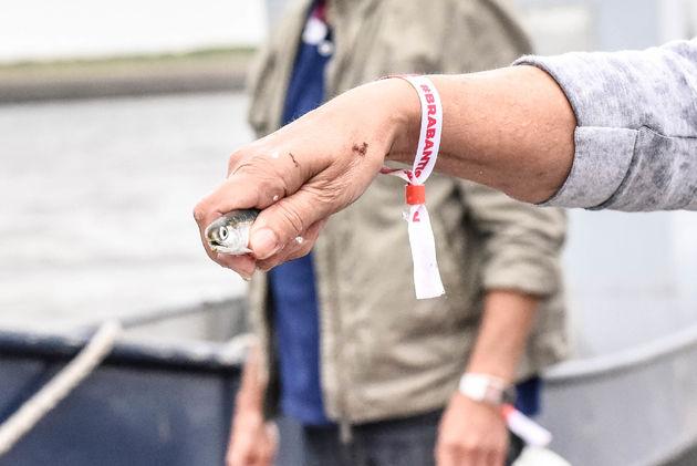 ansjovis-weervisserij