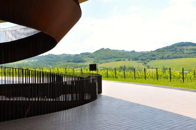 antinori-wijnvelden