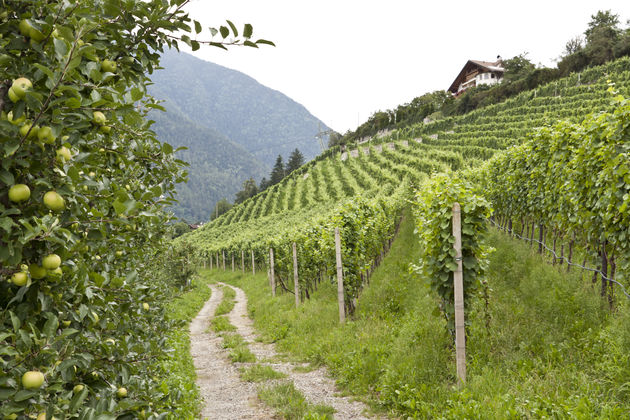 appel-wijn-griesserhof