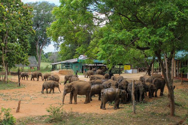 baby-olifanten-sri-lanka