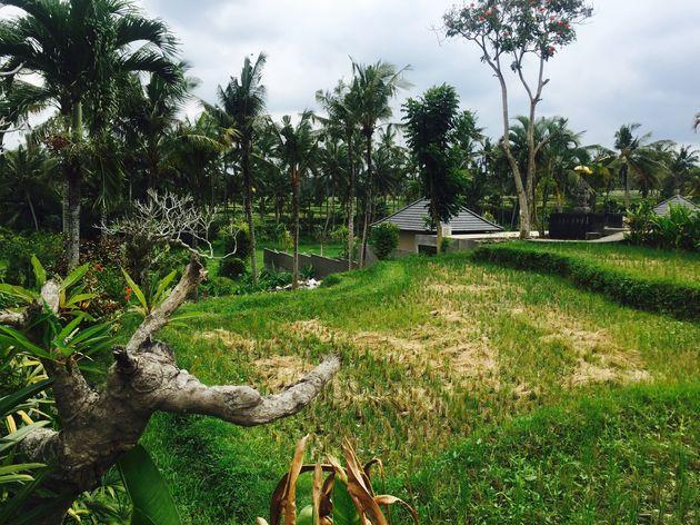 bali-inspiratie-rijstvelden
