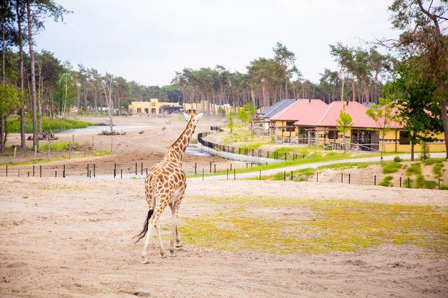 beekse-bergen-safari-resort