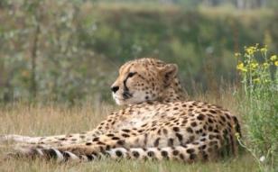 beekse_bergen_safaripark_travelvalley.jpg