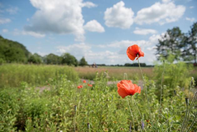 bloemen-dwingelderveld