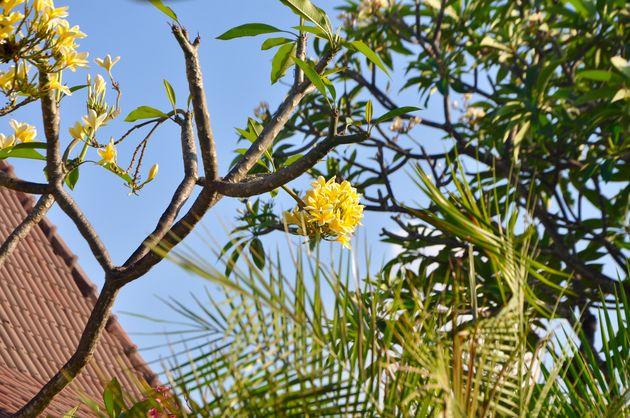 bloemen-tempo-doeloe
