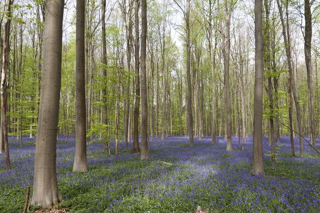 blue-forest-halle