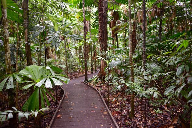 board-walk-daintree