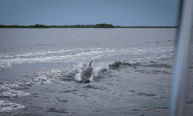 bocas-del-toro-dolfijn
