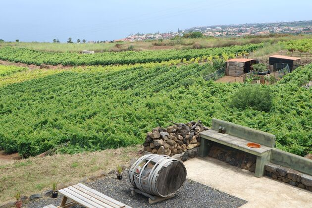 Bodejas Monje Tenerife rondleiding