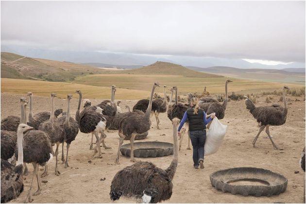 boerderij_zuid_afrika