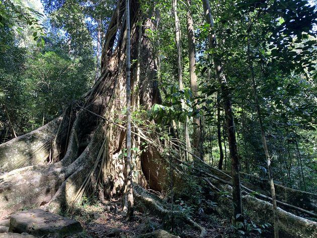 Bomen jungle