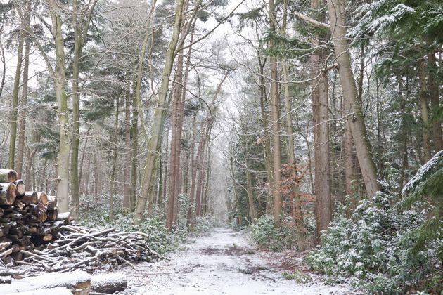 bos-sneeuw-fotograferen