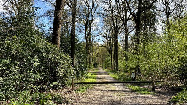 Bospaden_Kalmthoutse_Heide