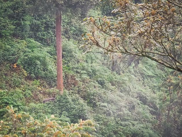 Boszwijn Nyungwe National Park Rwanda
